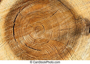 Pile wood - Pile old wood texture background