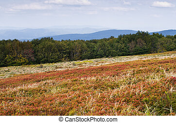 Polonina in Carpathians mountains - Berry alp in Carpathians...