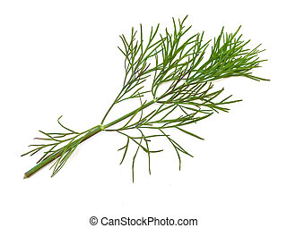green dill - The photo of the green dill at the white...