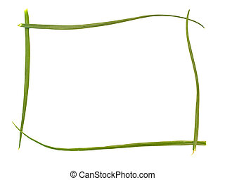 green bunch-onion frame against white background