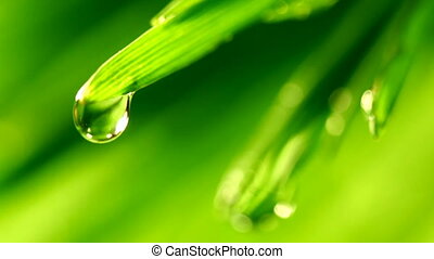 green grass with rain drops on it