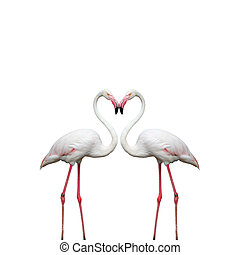 Two colorful flamingos looking at each other and building a...