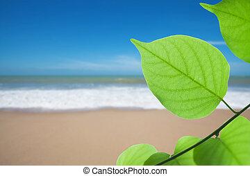 Green leaf on beach