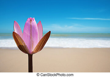 Pink lotus on beach