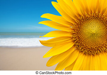 Sunflower on the beach
