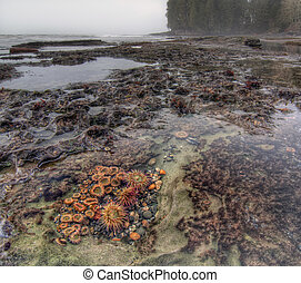 Botanical life in tidal pool - Tidal pool filled with living...