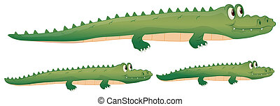 a crocodile - illustration of a crocodile on a white...