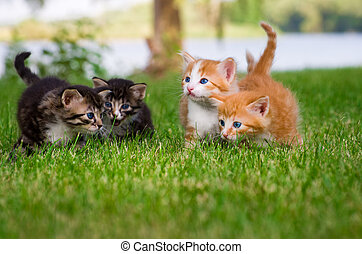 Four little kittens in garden - Four little kittens playing...