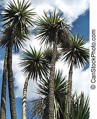 Palm Trees - Group of palm trees on a summers day