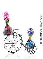 Old bike with colorful Hyacinths - Old bike with colorful...