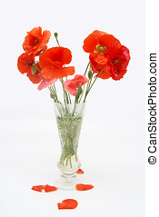 Bouquet of poppies in a crystal vase
