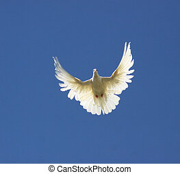 pigeon flying high blue sky clouds background
