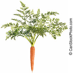 Carrot with leaf on white background