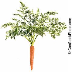 cenoura, folha, branca, fundo