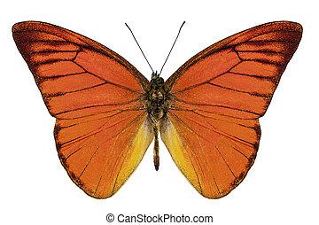 laranja, borboleta, espécie, appias, Nero, neronis,...