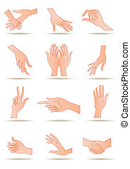 Humans hands in different positions - vector illustration