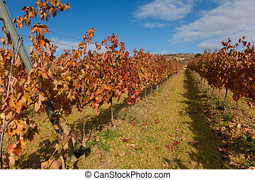 Vineyards in Laguardia, Alava, Basque Country, Spain