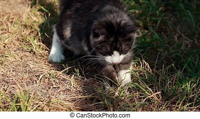 Cat playing with grass on a plot