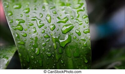 Heavy rain falls on green leaves.
