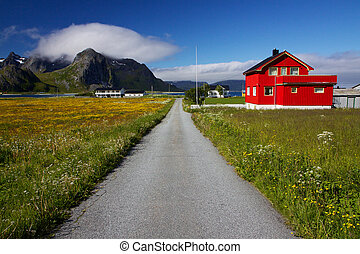 Lofoten - Road across flowering fields passing by colorful...