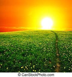 sunrise on dandelion field - sunrise yellow colorful clouds...