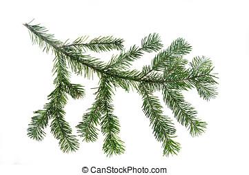 Design element.  Spruce branche