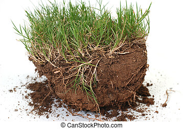Plug of grass and dirt is