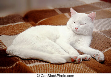 Pure white cat sleeping on bedding
