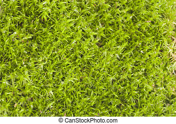 Green moss background with soft focus