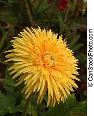 Fresh Flower in the garden...