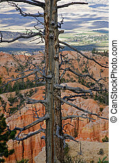 Still life in Bryce Canyon National Park, Utah, USA.
