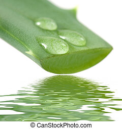 Aloe leaf with juice droplet