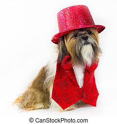 Dog in a Red Party Outfit