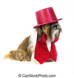 Dog in a Red Outfit