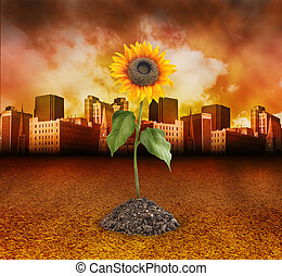 City Destruction with Nature Sunflower Growing - A single...