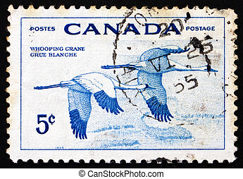 Postage stamp Canada 1955 Whooping Cranes, Birds - CANADA -...