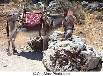 Donkey resting, Crete island Greece - Donkey resting at...