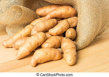 Burlap sack of fingerling potatoes - Burlap of fingerling...