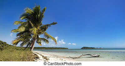 Summer beach scene with palm trees - Summer panoramic...