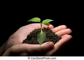 Hands in plant - Hands holding sapling in soil