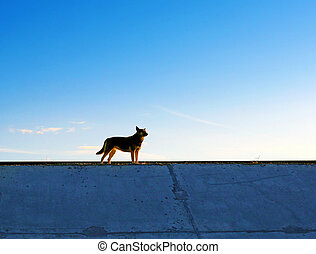The Dog - A Dog silhouette on the evening Sky background