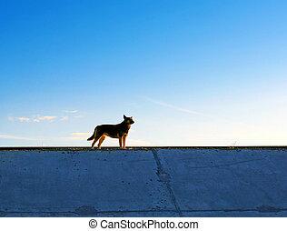 el, perro