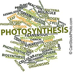 Photosynthesis - Abstract word cloud for Photosynthesis with...