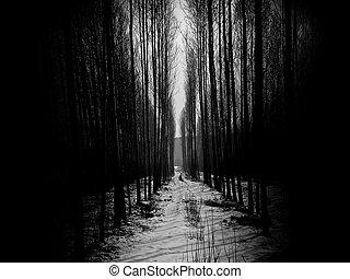 Deep Dark Forest - Tree trunks in an eerie dark forest.