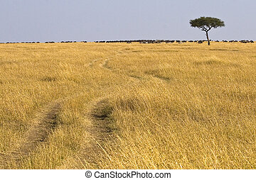 The Great Migration - Single tree in field with tracks...