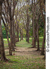 Tree line. - Tree height in a long line in front long in the...