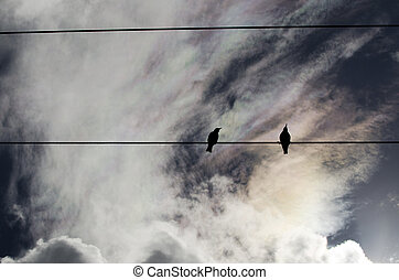 Two birds sit on electric pole under the open sky