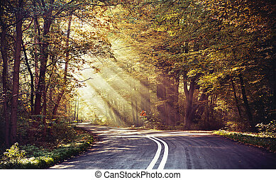 Great shoot of sunbeams above the road in the forest
