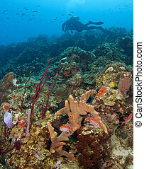 Scuba Diver on a St. Lucia Reef