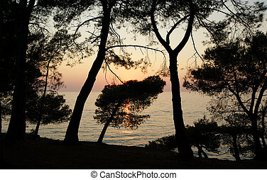 The contours of the trees on the background of a sunset at sea